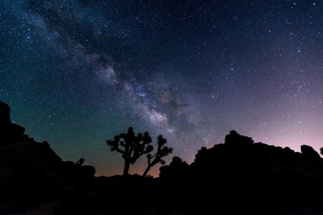 Joshua Tree National Park under starry sky