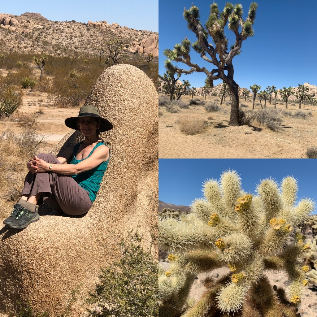 Collage of three desert photos: the author sitting on a rock, a Joshua tree, and a chollo cactus.